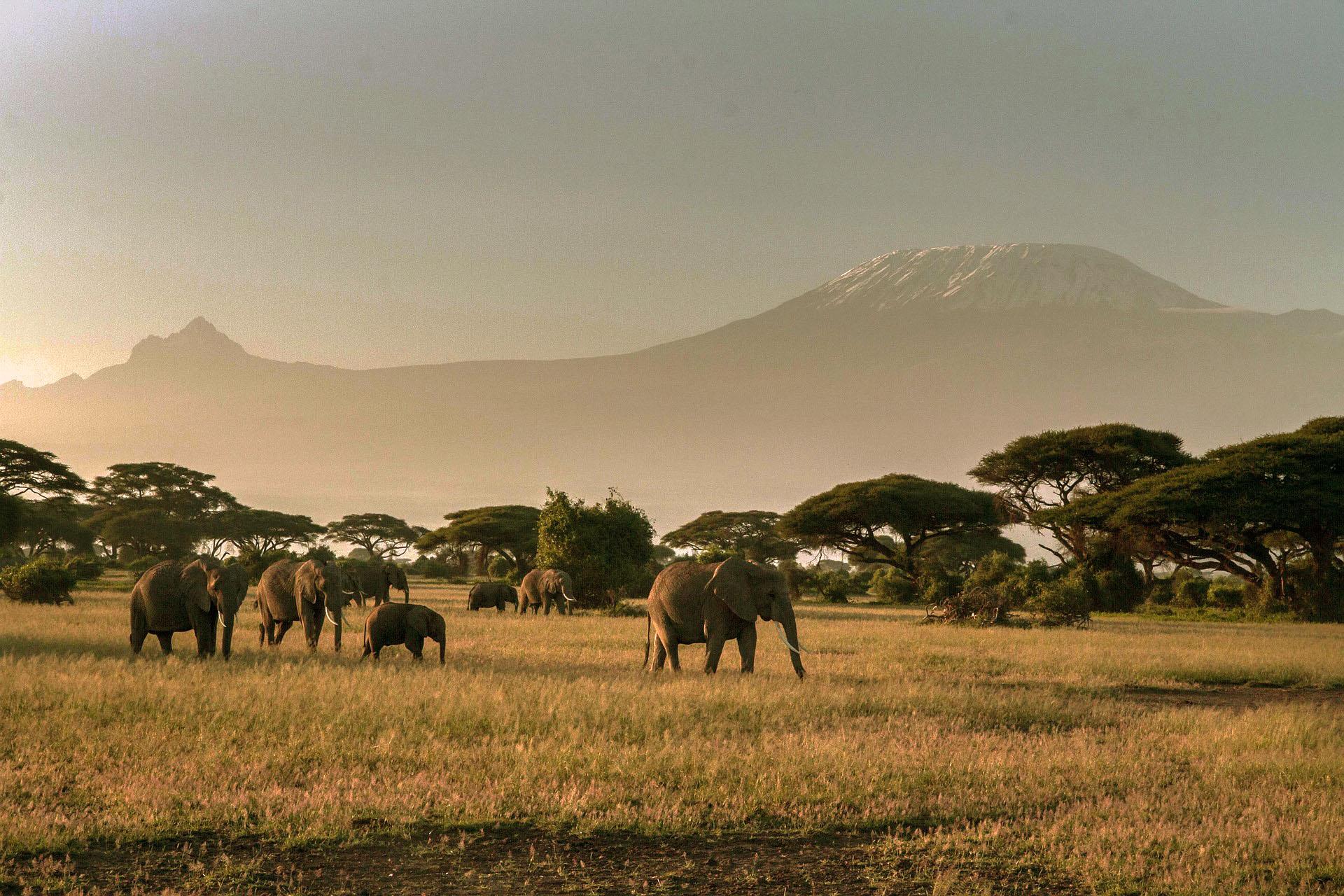 Luxus Safari Afrika sowie Südafrika, Kenia und Tansania mit dem Reisebüro von Daacke