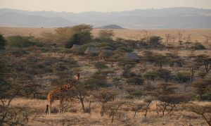 1-Lewa-Safari-Camp