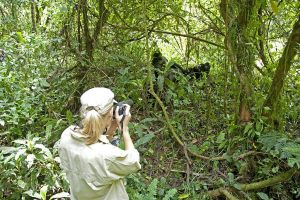 10-Gorilla-Forest-Camp