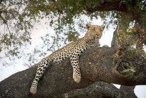 10-Sandibe-Safari-Lodge