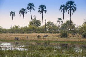 11-Sandibe-Safari-Lodge