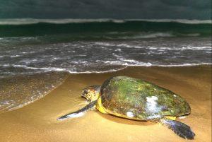 12-Thonga-Beach