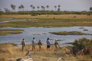 8-Sandibe-Safari-Lodge