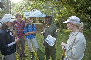 9-Gorilla-Forest-Camp