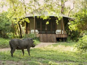 Guest-tent-at-andBeyond-Ngala-Tented-Camp-2-1-1
